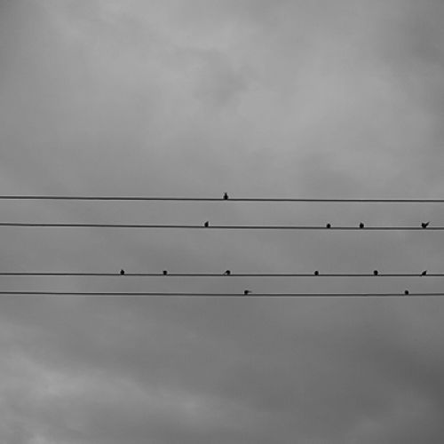 birds-on-a-wire-web18CB40E4-79C3-5532-0881-C70BFBD02C27.jpg